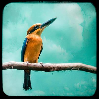 Kingfisher Photograph - Guam Kingfisher - Exotic Birds by Gary Heller