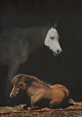 Shetland Pony Photograph - Guardian by Odd Jeppesen