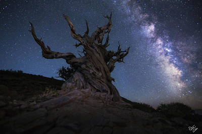 Peter James Nature Photograph - Guardian Of The Galaxy  by Peter Coskun