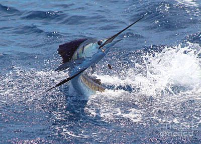 Swordfish Photograph - Guatemala Sailfish by Carey Chen