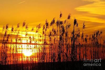 Landscapes Photograph - Gulf Shores Sunrise by Scott Cameron