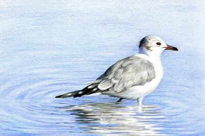 Gull Wading Original by Heather Mitchell