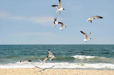 Gulls A Dance'n Print by Diana Angstadt