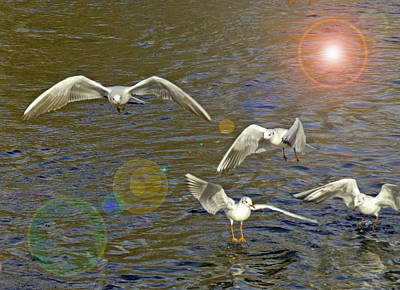 Photograph - Gulls And The Sun by Patty MacInnis