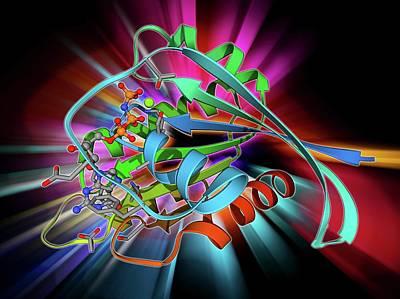 Ra Photograph - H-ras P21 Oncogene Protein by Laguna Design