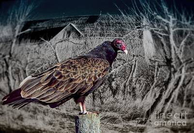Haunted House Photograph - Halloween Turkey Vulture by Henry Kowalski