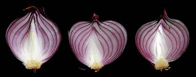 Onion Photograph - Halved Red Onions by Thomas Fester