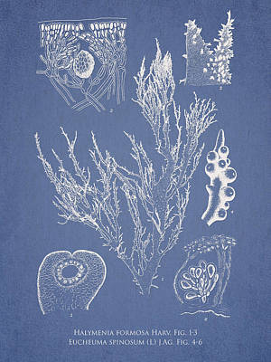 Algae Drawing - Halymenia Formosa And Eucheuma Spinosum by Aged Pixel