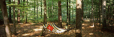 Getting Away From It All Photograph - Hammock In A Forest, Baden-wurttemberg by Panoramic Images