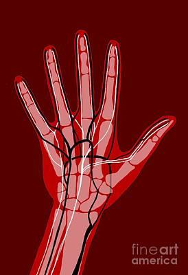 Hand Anatomy, Illustration Print by Claudia Stocker