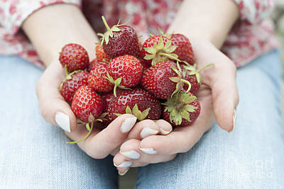 Freshly Photograph - Hands Holding Fresh Strawberries by Elena Elisseeva