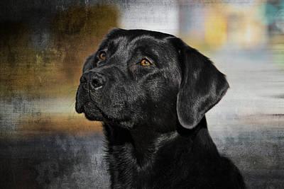 Retrievers Digital Art - Handsome Black Lab by Eleanor Abramson