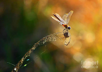 Flying Spider Photograph - Hang On by Carol Groenen