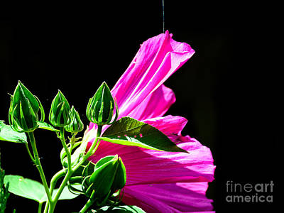 A Sunny Morning Photograph - Hanging By A Thread by Debra Martz