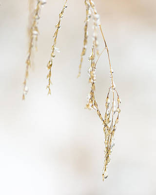 Hanging Frozen Grass Virtical Print by David Waldo