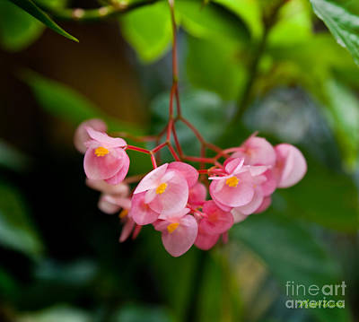 Landscape Photograph - Hanging In Pink by Michelle Wiarda