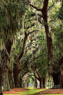 Georgia Plantation Photograph - Hanging Moss And Giant Oaks by Adam Jewell