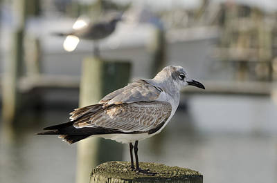 Birds Photograph - Hanging Out On The Pier by Teresa Maybaum