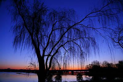 Hanging Tree Sunrise Print by Metro DC Photography