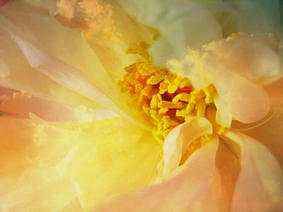 Photograph - Happiness by Shirley Sirois