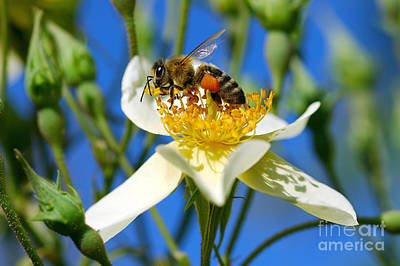 Bee Photograph - Happy Bee by George Atsametakis