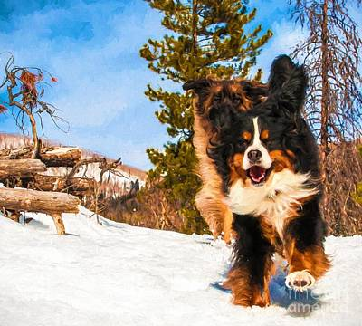 Happy Bernese Mountain Dog And Leonberger Winter  Print by Gary Whitton