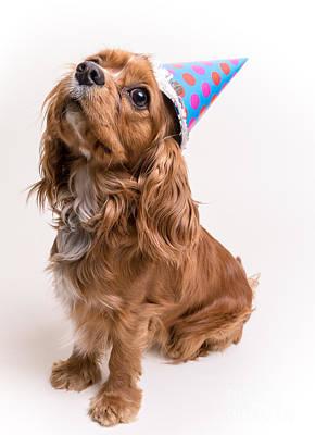 Hat Photograph - Happy Birthday Dog by Edward Fielding