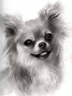 Happy Chihuahua Dog Portrait Print by Svetlana Novikova