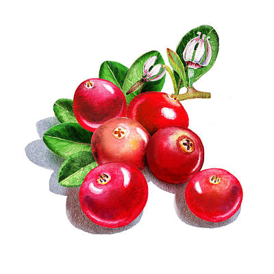 Happy Cranberry Bunch Print by Irina Sztukowski