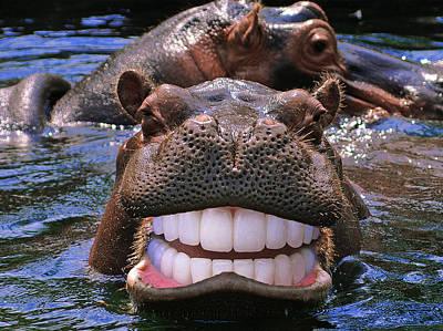 Nice Teeth Digital Art - Happy Hippo by Chris Campbell