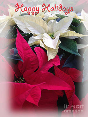 Flowers Photograph - Happy Holiday by Tom Gari Gallery-Three-Photography