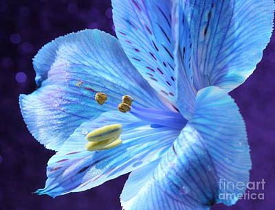 Blue Flowers Photograph - Happy by Krissy Katsimbras