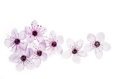 Happy Spring Print by Rebecca Cozart