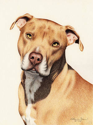 Dogs Drawing - Harley by Katherine Plumer