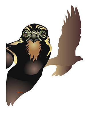 Raptor Digital Art - Harrier Hawk by Patricia Howitt