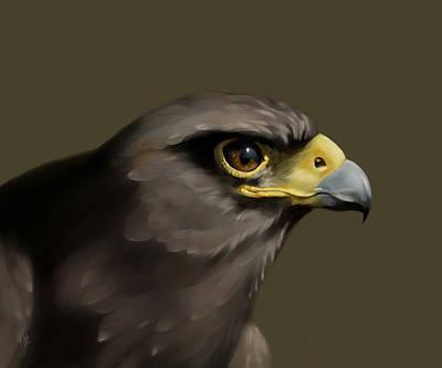 Hawk Digital Art - Harris Hawk by Arie Van der Wijst