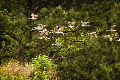 Ibis Digital Art - Harris Neck Ibis In Flight by Priscilla Burgers