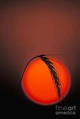 Harvest Sunset - Fs000416 Print by Daniel Dempster