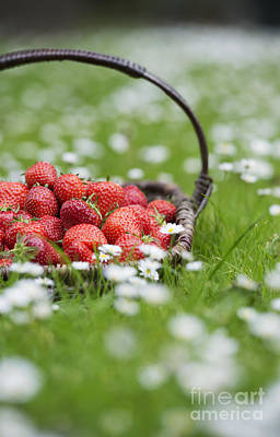 Freckles Photograph - Harvested Strawberries by Tim Gainey