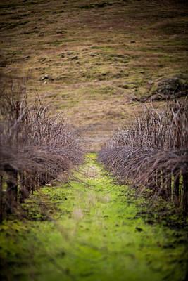 Harvested Vines Print by Mike Lee