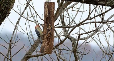 Woodpecker Mixed Media - Having Breakfast by Richard B Mangrum
