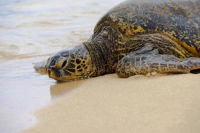 Hawaiian Green Sea Turtle 3 Print by Brian Harig