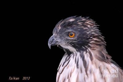 Taikan Digital Art - Hawk Called Shu by Taikan Nishimoto