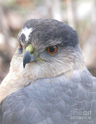 Photograph - Hawk Eye 13528-3 by Robert E Alter Reflections of Infinity