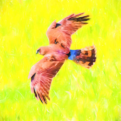 Birds Mixed Media - Hawk In Flight Art by Priya Ghose