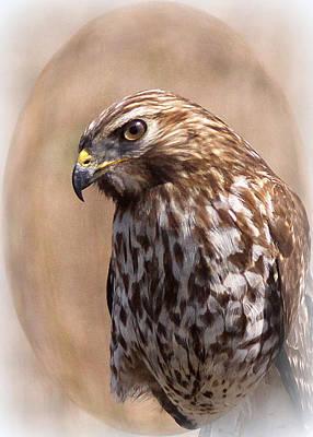 Hawk - Sphere - Bird Print by Travis Truelove