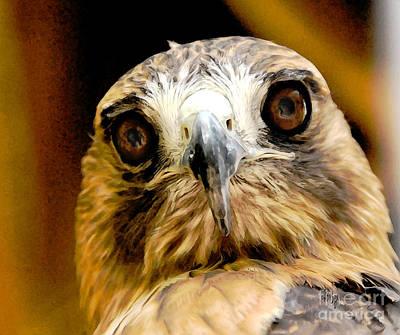 Hawk Digital Art - Hawkeye by Lois Bryan