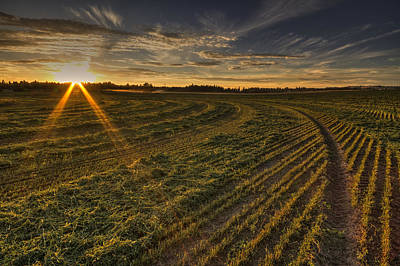 Hay And Sun Rays Print by Mark Kiver