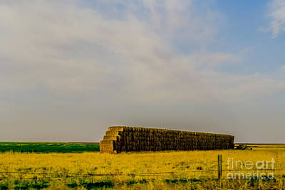 Americana Photograph - Hay There by Gib Martinez