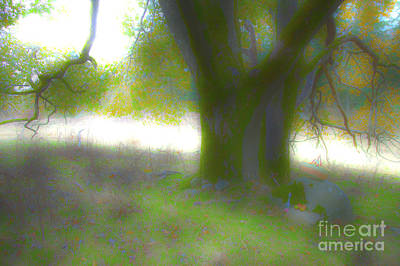 Hdr Tree Print by Graham Foulkes